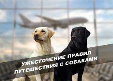 Ужесточение правил путешествия с собаками