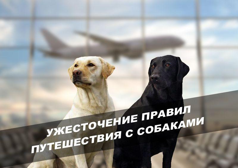 правила въезда в США с собаками